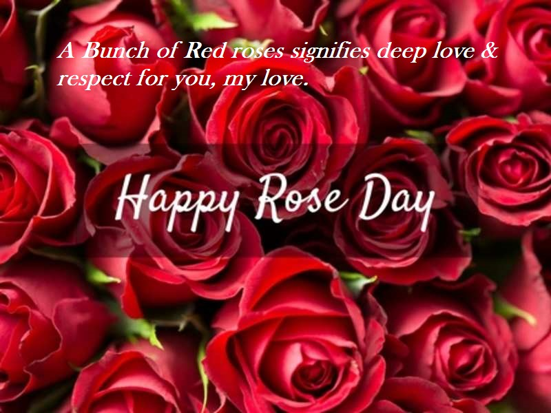 Happy Rose Day 4