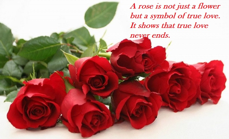 Happy Rose Day 5
