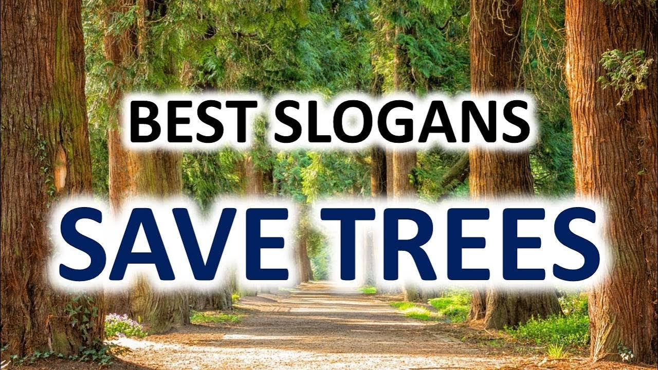 Slogans on Save Trees – Best and Catchy Save Trees Slogan