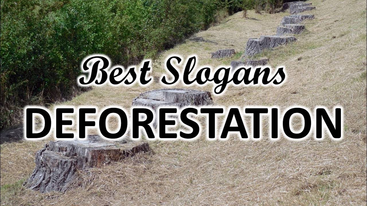 FAMOUS SLOGANS ON DEFORESTATION