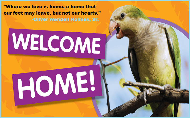 Welcome home quotes