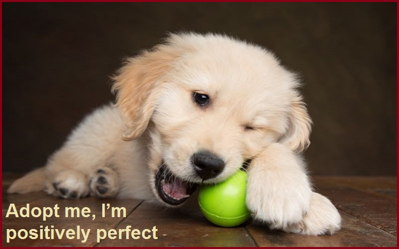 Adopt me, I'm positively perfect